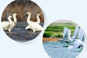 冬季到 來看鳥——鄱陽湖觀鳥攻略