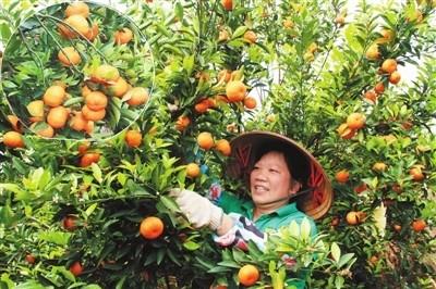 广西平南国安瑶乡风景