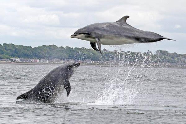 英國攝影師捕捉海豚嬉戲跳躍畫面