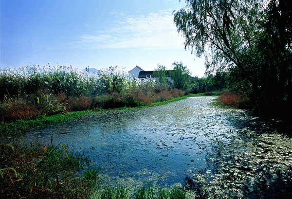 5A西溪濕地景區已完成全面整改 將打造國際級旅遊目的地