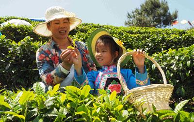 广西南丹举办茶文化旅游节
