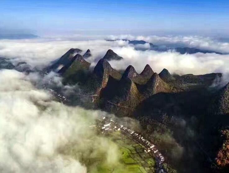 貴州萬峰林景區6000畝油菜花提前一月開放