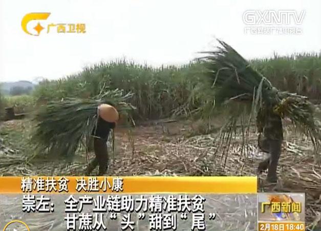 """崇左:全産業鏈助力精準扶貧 甘蔗從""""頭""""甜到""""尾"""""""