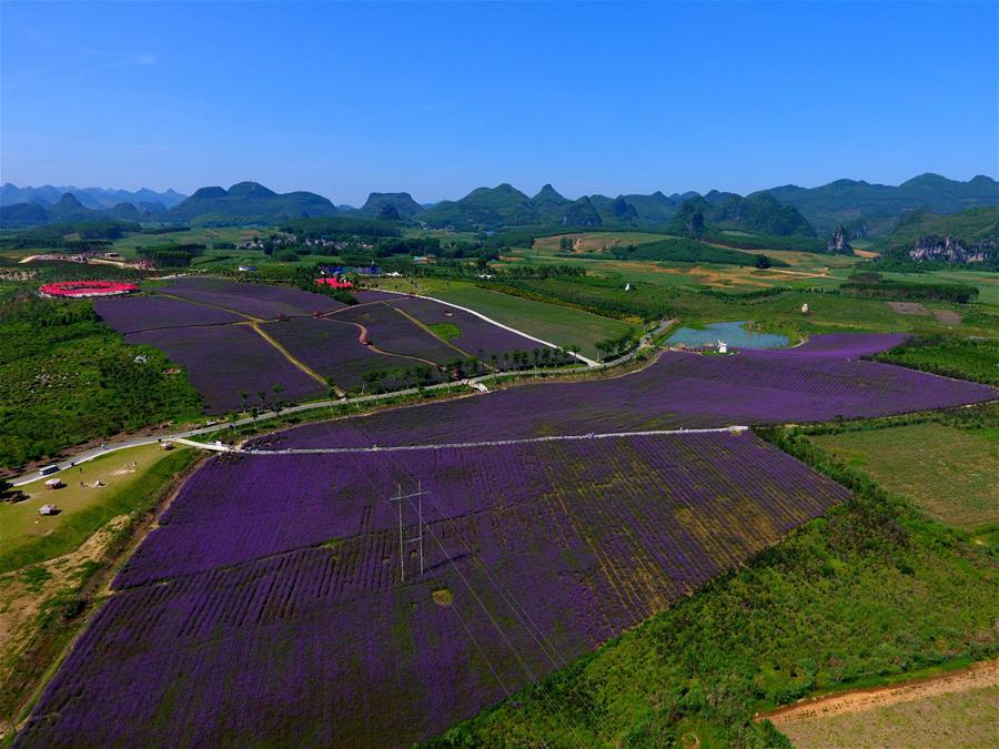 從種甘蔗到種花的創造性裂變——一個西部貧困縣農業供給側改革的生動實踐