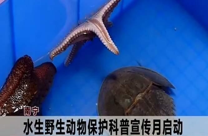 南寧:水生野生動物保護科普宣傳月啟動