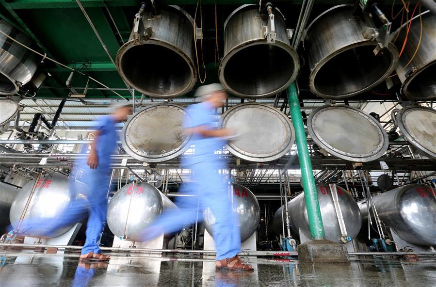 融安:青蒿産業富農增收