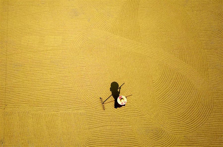 鹿寨:制種水稻豐收