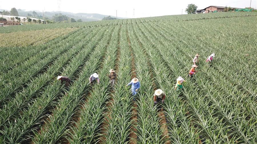 綠水青山催開生態農業花