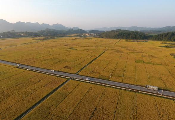 廣西上林:鄉村路網建設助脫貧