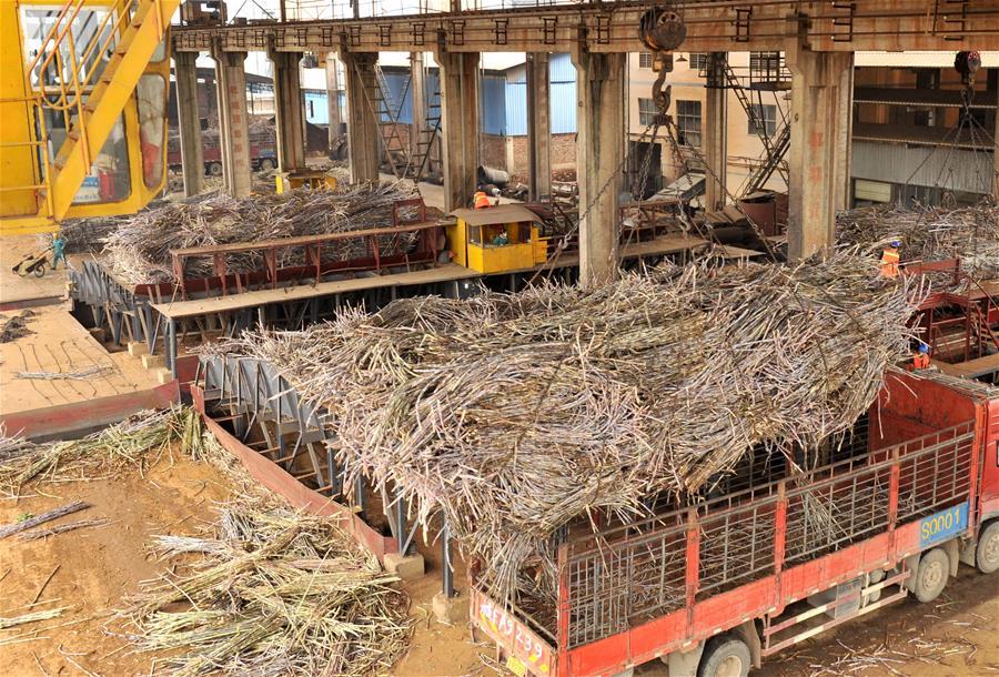 廣西迎來糖廠開榨高峰期