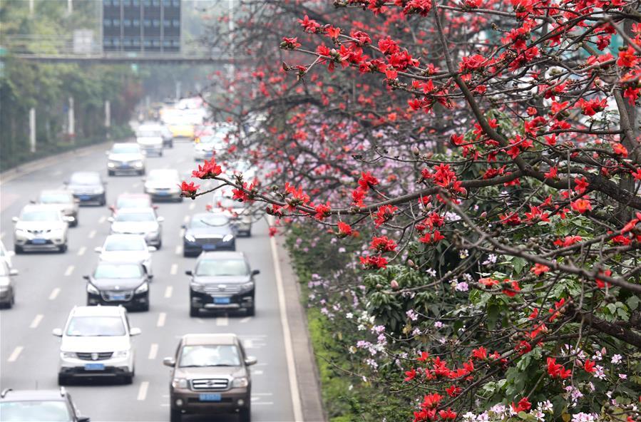 南國三月木棉紅