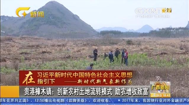 貴港樟木鎮:創新農村土地流轉模式 助農增收致富
