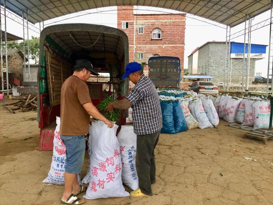 橫縣蘇安村:土地流轉建産業基地 合作社助脫貧致富
