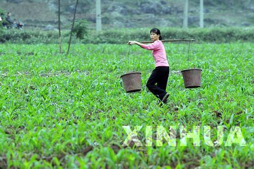 廣西馬山:加快推進春耕生産