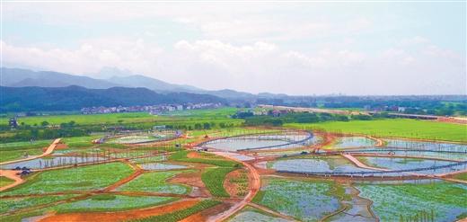 貴港精心打造300畝精品荷花園