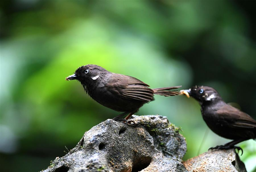 與鳥兒共生共榮的村莊