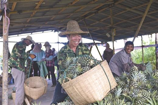 上思縣大力發展特色水果種植