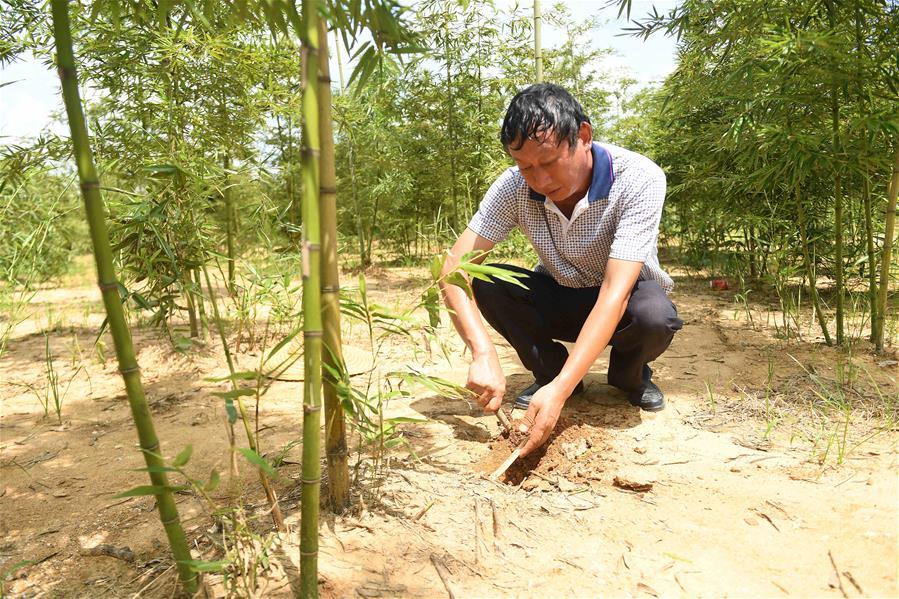 钦州:发展特色种植助贫困户脱贫