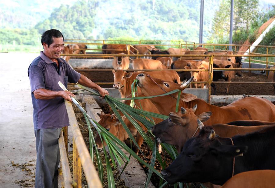 廣西寧明:循環産業助力脫貧