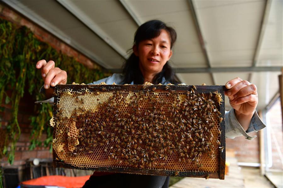 養蜂撐起脫貧致富的希望