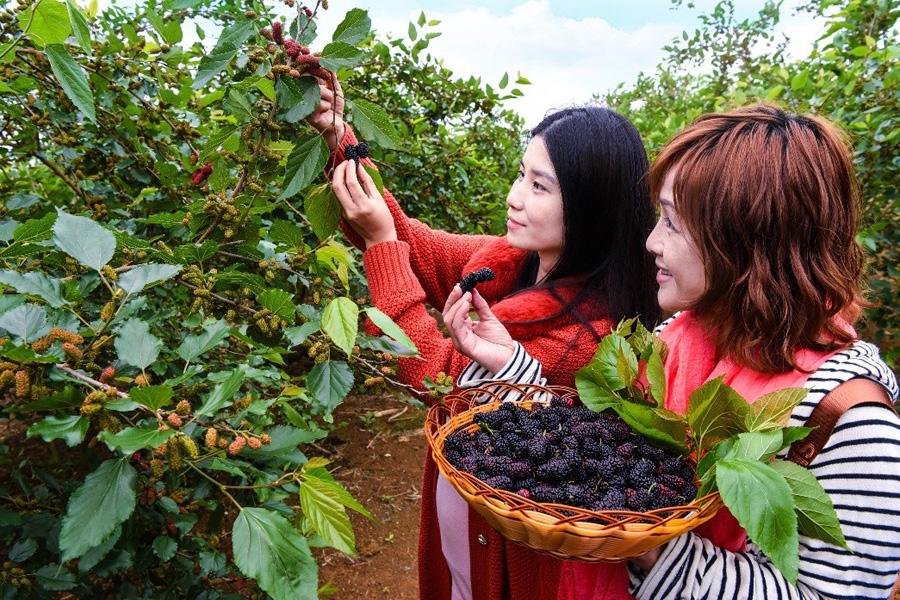 現代農業蓬勃發展 農業大縣邁向農業強縣