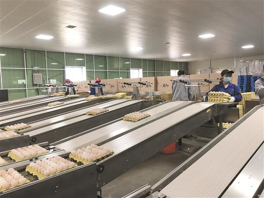 粵桂生態農業合作示范區溫氏家禽産業項目啟用