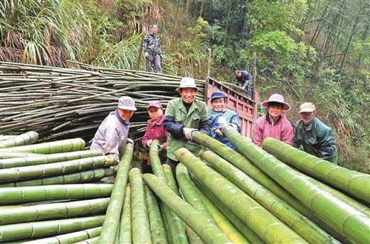 平桂區發展竹産業帶動1000多戶貧困戶增收