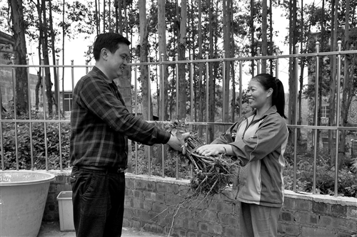 """邕寧區:將""""搖錢樹""""送到貧困戶手中"""