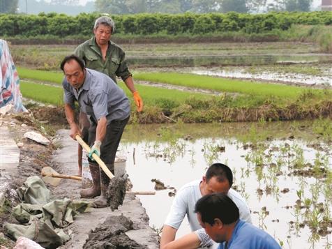 鐘山縣完成插播早稻2.5萬畝 種植玉米2.72萬畝