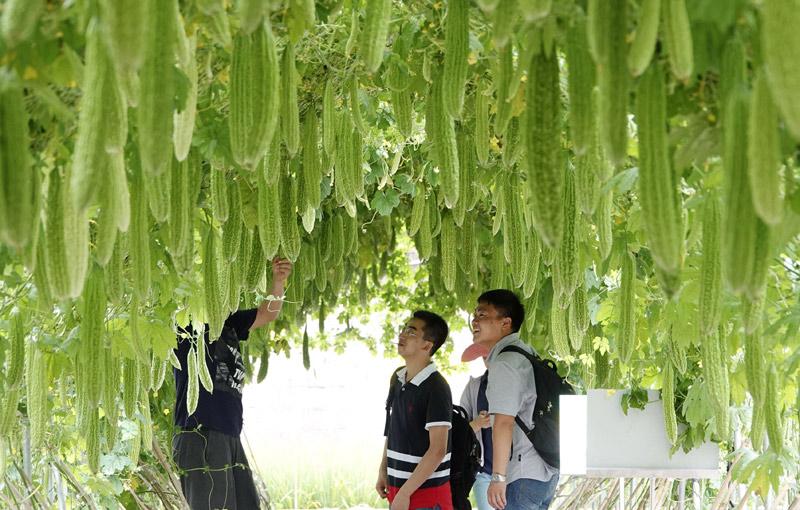 中國(廣西)—東盟蔬菜新品種博覽會在南寧舉行