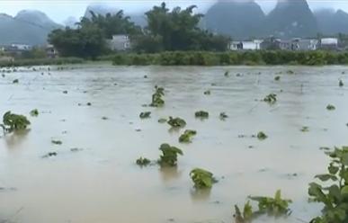 河池宜州:北牙瑤鄉內澇 應急預案啟動