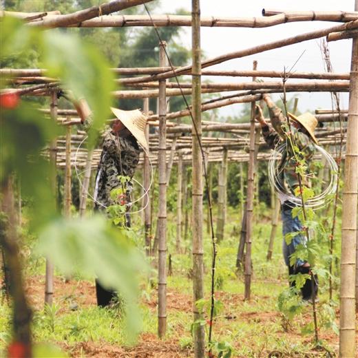 鐘山高標準建設農業標準化生産示范樣板
