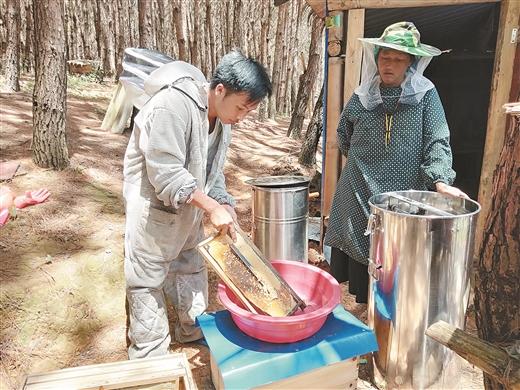 西林大力發展蜜蜂養殖特色産業