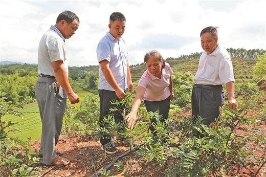 藤縣積極鼓勵引導經濟能人帶頭發展産業
