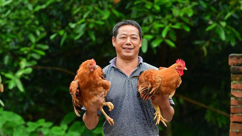 廣西柳州:周世全的脫貧之路