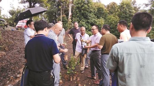自治區林業局在賀州舉辦良種油茶苗木識別技術培訓班
