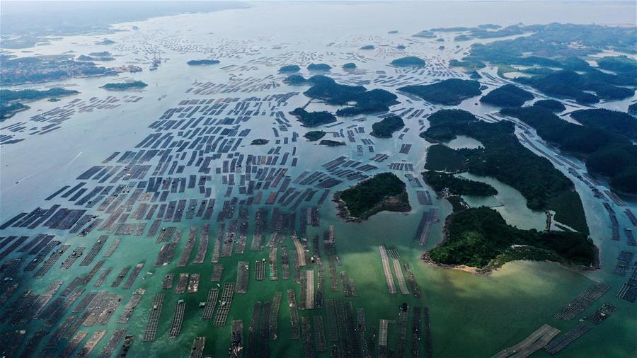 """廣西欽州建海洋牧場 打造生態""""藍色糧倉"""""""