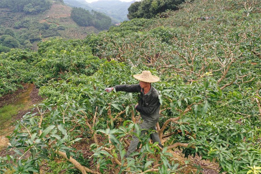 廣西百色:果蔬種植助農增收