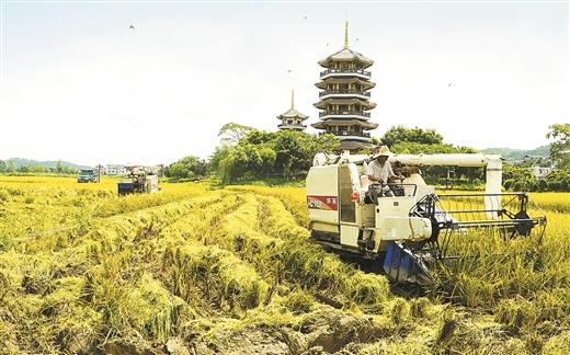 五彩田園全力推進現代特色農業發展