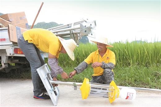 南丹大力推廣農業綠色防蟲滅蟲技術