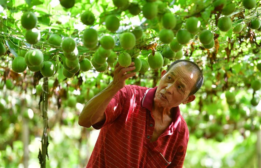 廣西鹿寨:發展生態經濟 助瑤寨脫貧致富