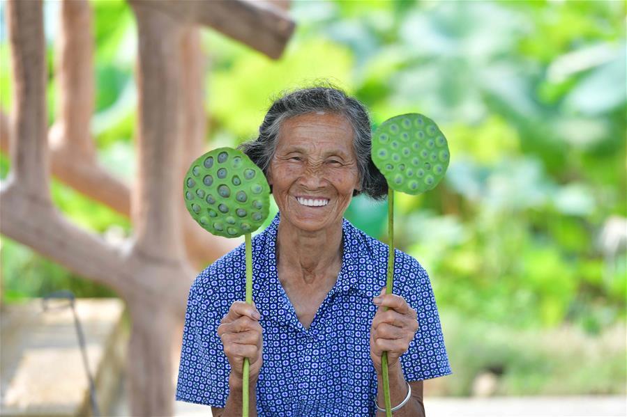 廣西鹿寨:荷蓮經濟助脫貧