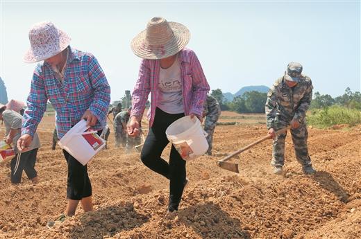 柳北區石碑坪鎮古城村建成300畝蔬菜種植基地