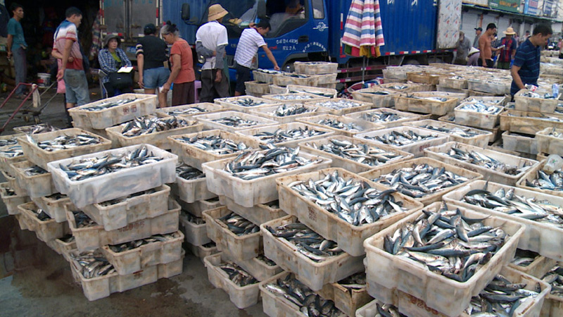 豐收的味(wei)道漁船歸來(lai)魚滿艙