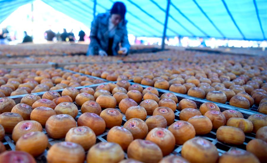 廣西平樂:山村月柿引客來