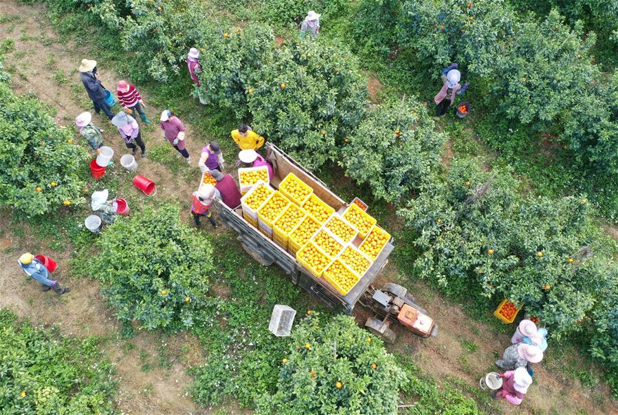 """廣西武鳴(ming)︰""""綠色通道(dao)""""助農產品銷售"""