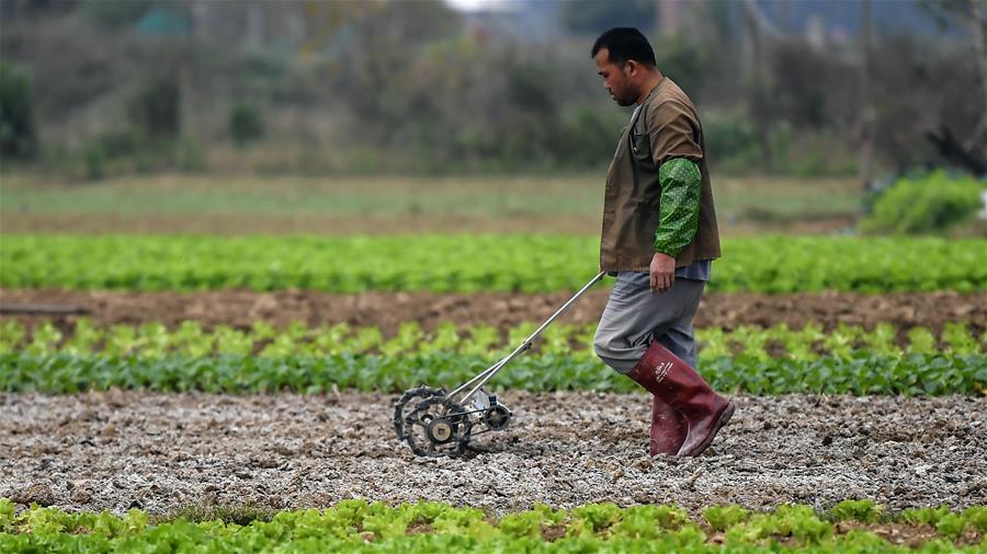 廣西欽州:蔬菜基地復工