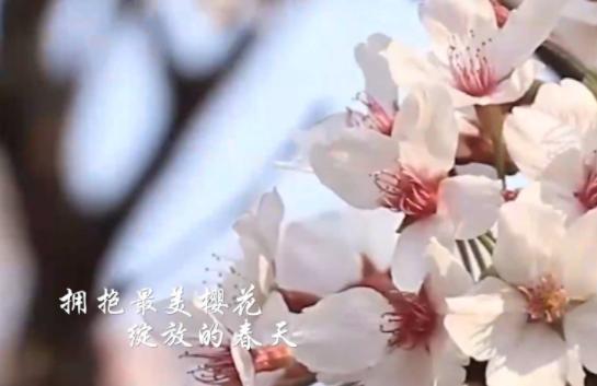 原創MV:《我要去武漢》