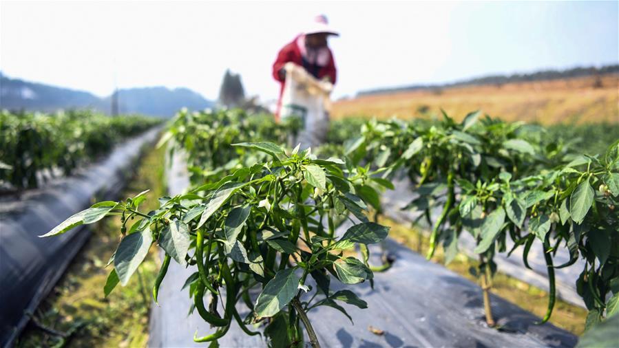 廣西欽州:復工復産助力經濟發展