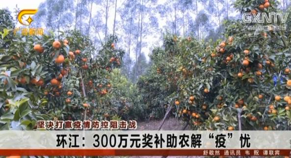"""環江:300萬元獎補助農解""""疫""""憂"""